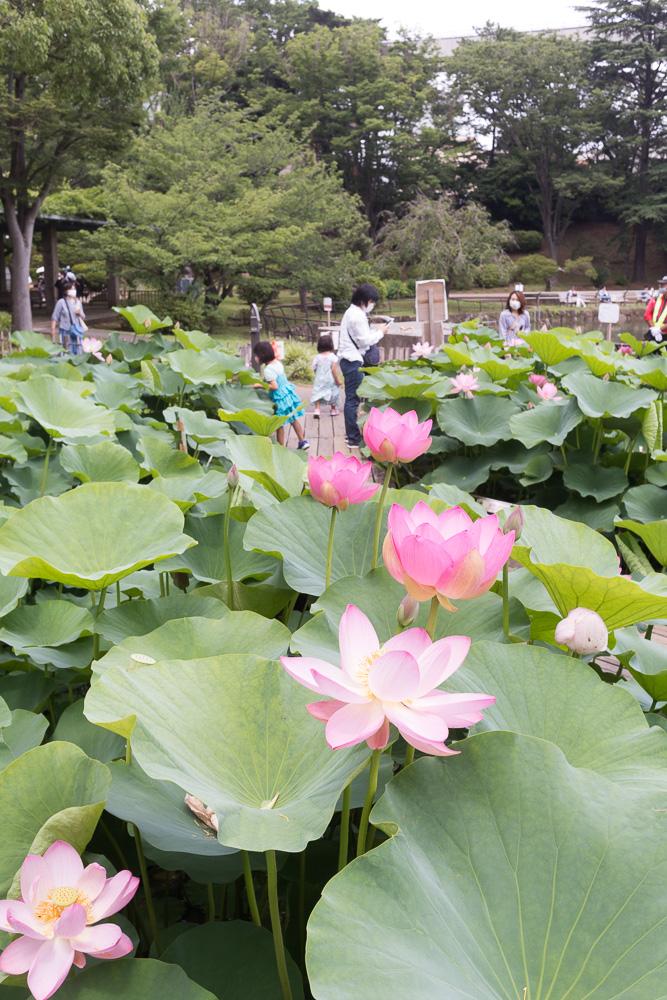 千葉公園の四季(2020/06/21,22)日、月
