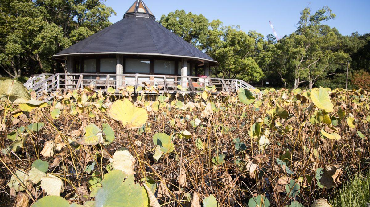 千葉公園の四季(2020/09/28)秋分を過ぎ寒露
