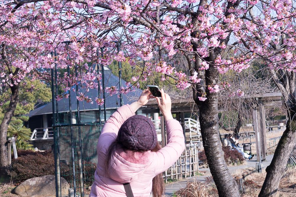 千葉公園の四季(2021/02/22)五月なみの気温に