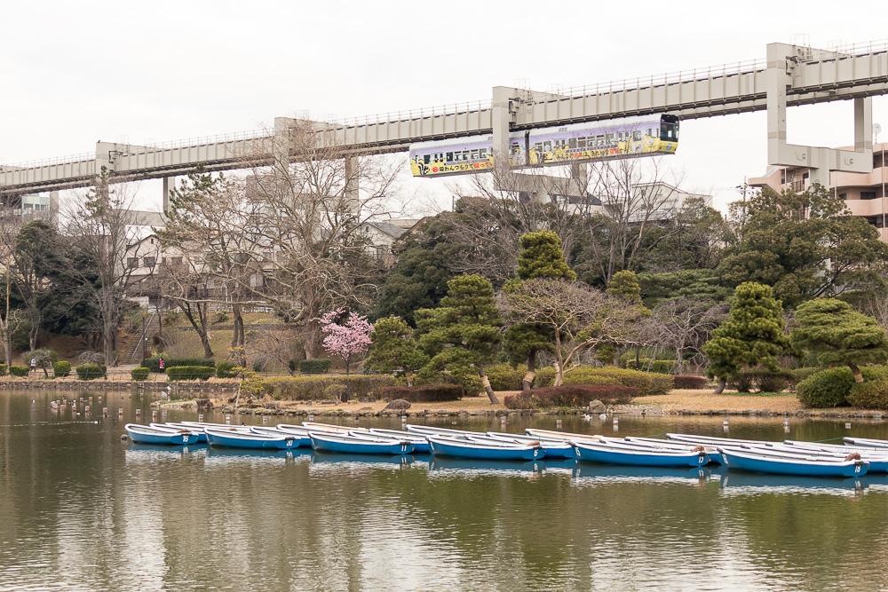 ボートが浮かび、桜満開に