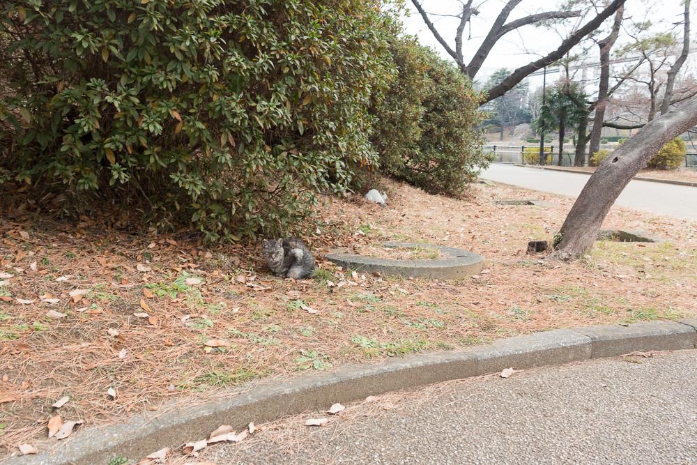 千葉公園の四季(2021/05/11)マスコット猫たち亡くなりました
